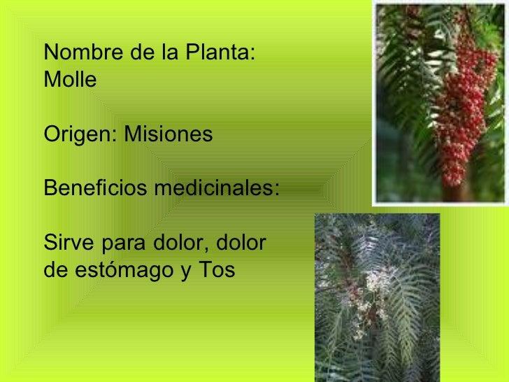 Plantas medicinales Nombres de plantas comunes