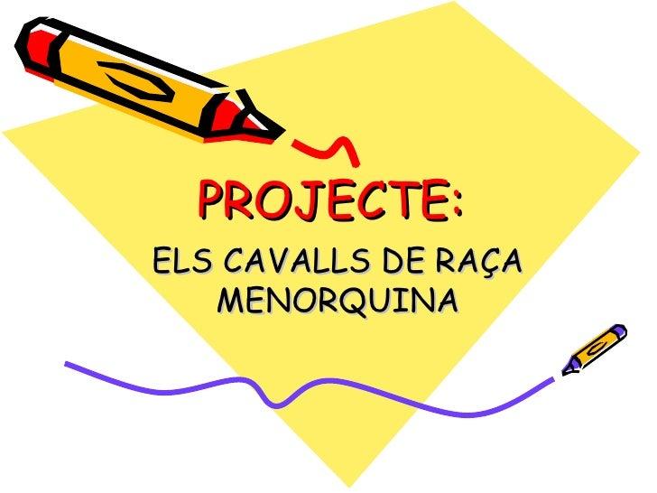 PROJECTE: ELS CAVALLS DE RAÇA MENORQUINA