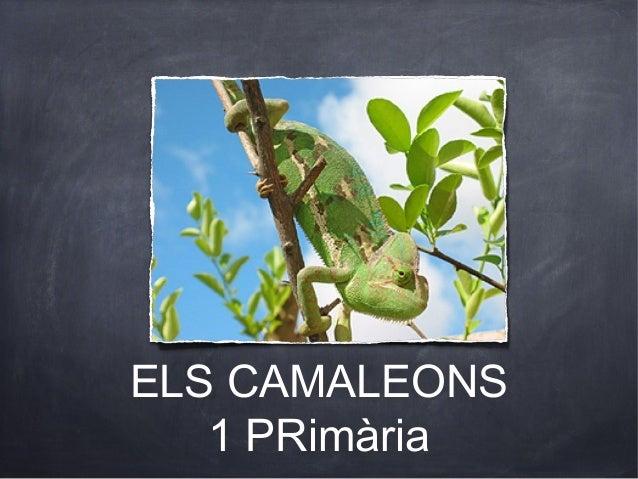 ELS CAMALEONS   1 PRimària