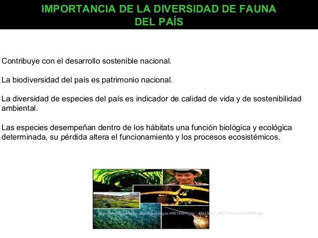 IMPORTANCIA DE LA DIVERSIDAD DE FAUNA DEL PAÍS  Contribuye con el desarrollo sostenible nacional. La biodiversidad del paí...