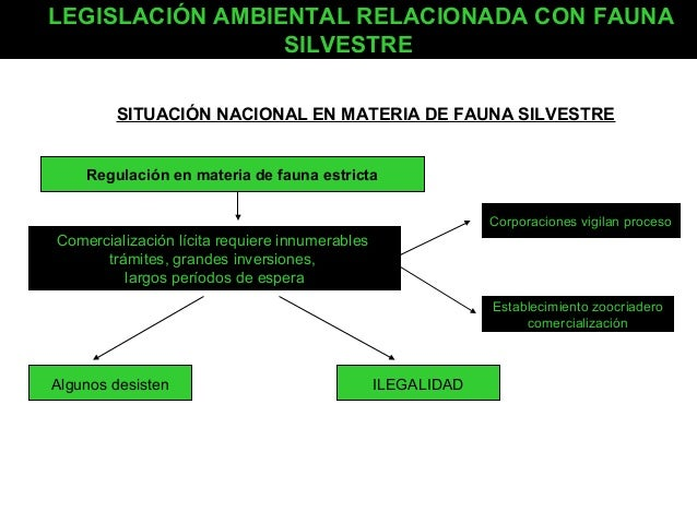 LEGISLACIÓN AMBIENTAL RELACIONADA CON FAUNA SILVESTRE SITUACIÓN NACIONAL EN MATERIA DE FAUNA SILVESTRE Regulación en mater...