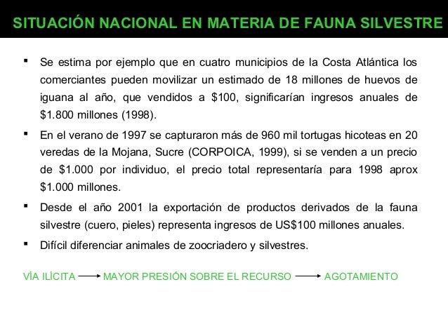 SITUACIÓN NACIONAL EN MATERIA DE FAUNA SILVESTRE   Se estima por ejemplo que en cuatro municipios de la Costa Atlántica l...