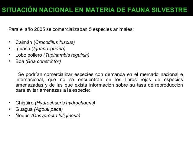 SITUACIÓN NACIONAL EN MATERIA DE FAUNA SILVESTRE Para el año 2005 se comercializaban 5 especies animales: • • • •  Caimán ...