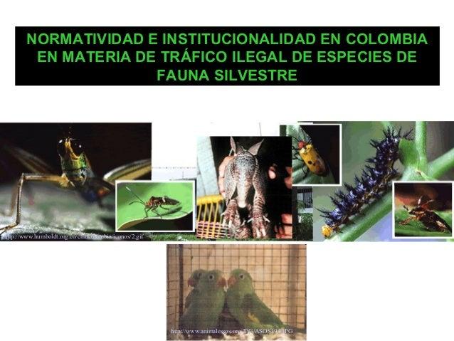 NORMATIVIDAD E INSTITUCIONALIDAD EN COLOMBIA EN MATERIA DE TRÁFICO ILEGAL DE ESPECIES DE FAUNA SILVESTRE  http://www.humbo...