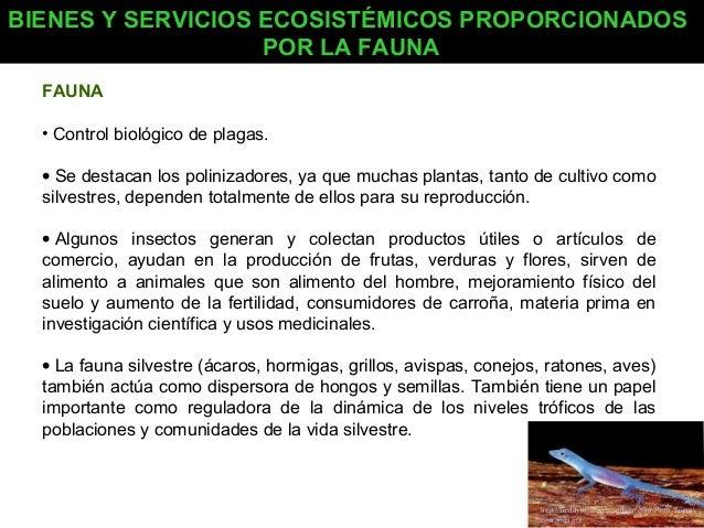 BIENES Y SERVICIOS ECOSISTÉMICOS PROPORCIONADOS POR LA FAUNA FAUNA • Control biológico de plagas. • Se destacan los polini...