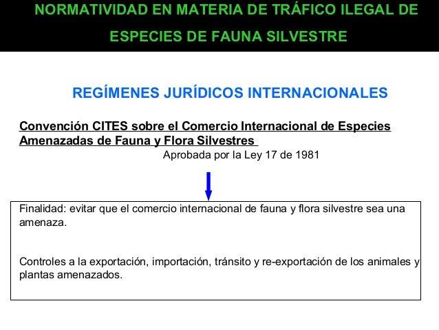 NORMATIVIDAD EN MATERIA DE TRÁFICO ILEGAL DE ESPECIES DE FAUNA SILVESTRE  REGÍMENES JURÍDICOS INTERNACIONALES Convención C...