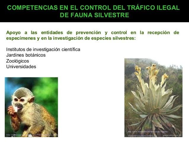 COMPETENCIAS EN EL CONTROL DEL TRÁFICO ILEGAL DE FAUNA SILVESTRE Apoyo a las entidades de prevención y control en la recep...