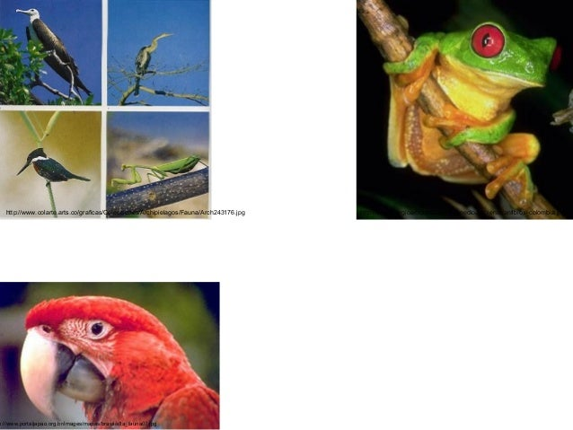 http://www.colarte.arts.co/graficas/Colecciones/Archipielagos/Fauna/Arch243176.jpg  p://www.portaljapao.org.br/images/mapa...