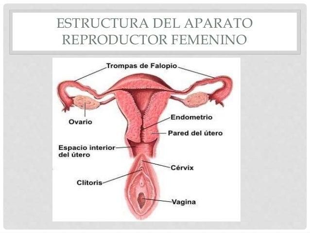 Presentaciion 5 biologia y conducta aparato reproductor masculino y f…