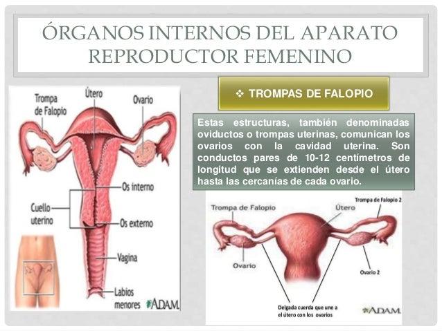 Presentaciion 5 Biologia Y Conducta Aparato Reproductor