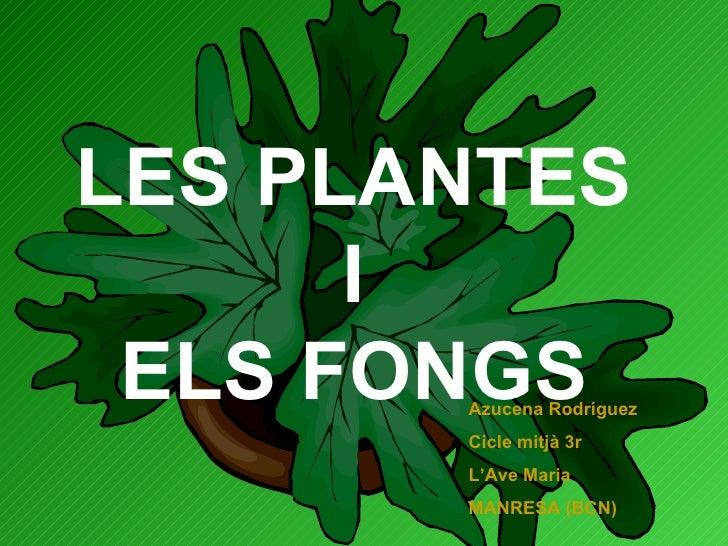 LES PLANTES I ELS FONGS Azucena Rodríguez Cicle mitjà 3r L'Ave Maria MANRESA (BCN)