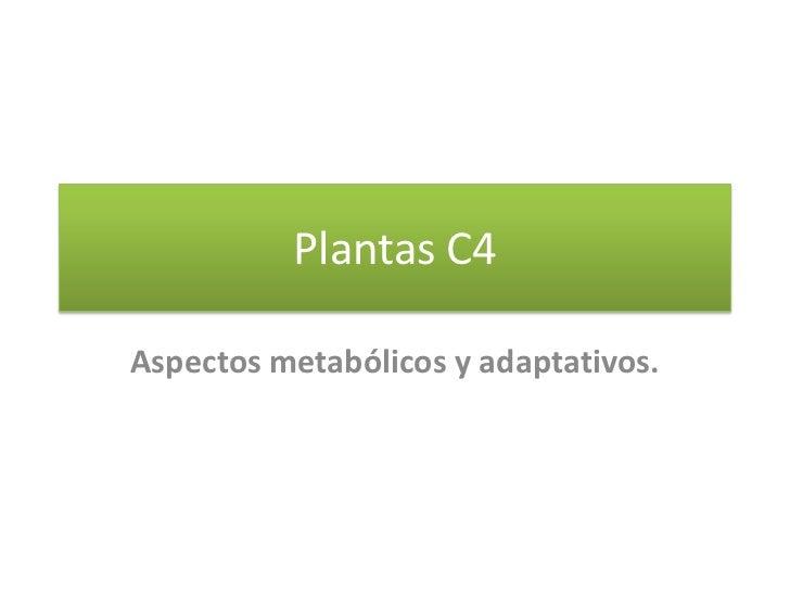 Plantas C4<br />Aspectos metabólicos y adaptativos. <br />