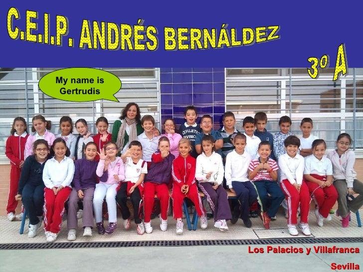 C.E.I.P. ANDRÉS BERNÁLDEZ 3º A Los Palacios y Villafranca Sevilla My name is Gertrudis