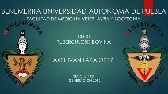 BENEMERITA UNIVERSIDAD AUTONOMA DE PUEBLA FACULTAD DE MEDICINA VETERINARIA Y ZOOTECNIA  DHTIC  TUBERCULOSIS BOVINA  AXEL I...