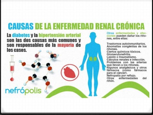 C lulas madre y su relaci n con la insuficiencia renal cr nica for Alimentos prohibidos para insuficiencia renal