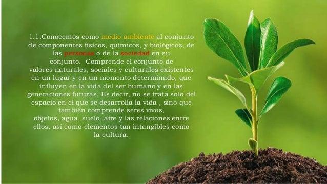 Deforestación La deforestación es el proceso de desaparición de los bosques o masas forestales, fundamentalmente causada p...