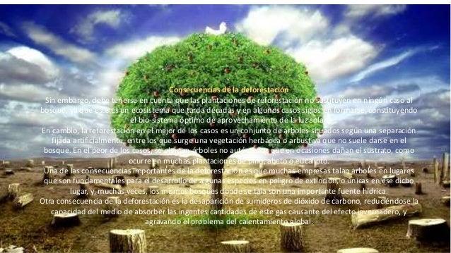 • Como medida de contención, diversos organismos internacionales proponen la reforestación, medida parcialmente aceptada p...