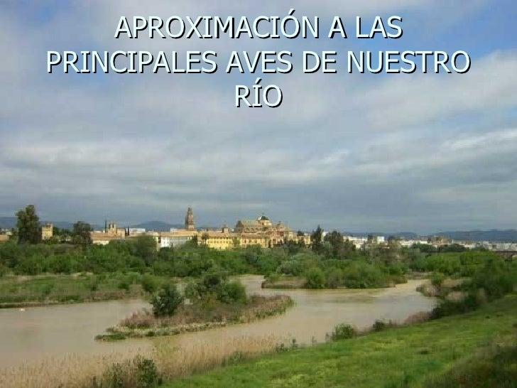 APROXIMACIÓN A LAS PRINCIPALES AVES DE NUESTRO RÍO