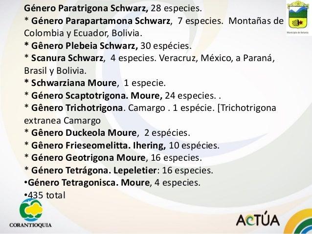 Género Paratrigona Schwarz, 28 especies. * Género Parapartamona Schwarz, 7 especies. Montañas de Colombia y Ecuador, Boliv...