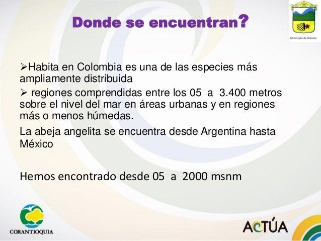 Donde se encuentran? Habita en Colombia es una de las especies más ampliamente distribuida  regiones comprendidas entre ...