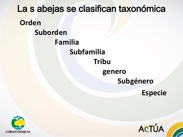 Orden Suborden Familia Subfamilia Tribu genero Subgénero Especie La s abejas se clasifican taxonómica