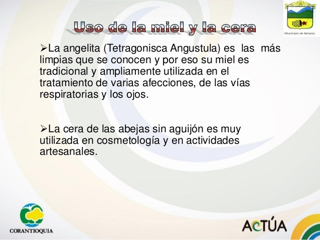 La angelita (Tetragonisca Angustula) es las más limpias que se conocen y por eso su miel es tradicional y ampliamente uti...