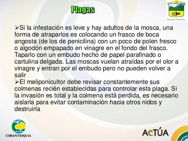 2. Hormigas: Causan muchos daños especialmente en colmenas débiles. Una forma de evitar que lleguen a estas colmenas es co...