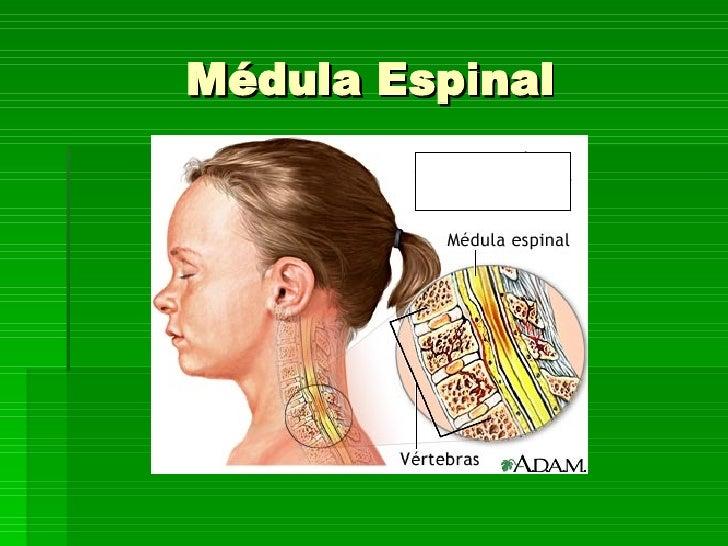 PresentacióN Medula Espinal Slide 2