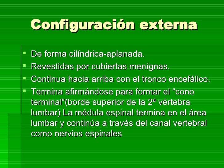 PresentacióN Medula Espinal Slide 3