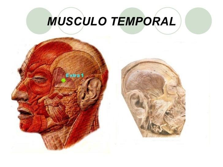 Presentación Musculos de la Cara