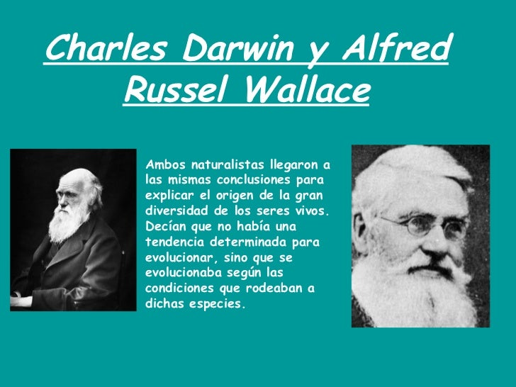 darwin and wallace Alfred russel wallace om frs (8 january 1823 – 7 november 1913) was an english naturalist, explorer, geographer, anthropologist, and biologist he is best known for independently conceiving the theory of evolution through natural selection  his paper on the subject was jointly published with some of charles darwin 's writings in 1858 [3.