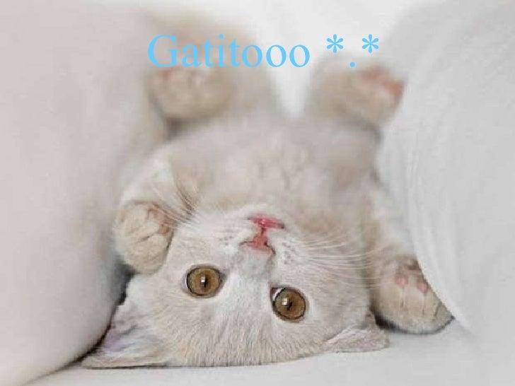 Gatitooo   *.*