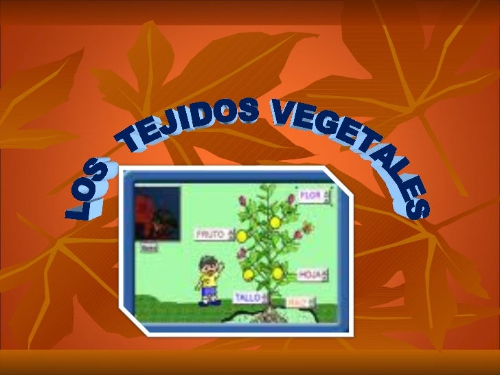Tejidos vegetales - Informacion sobre la fibra vegetal ...