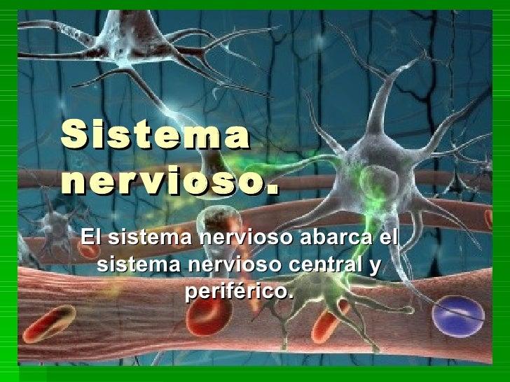 Sistema nervioso. El sistema nervioso abarca el sistema nervioso central y periférico.