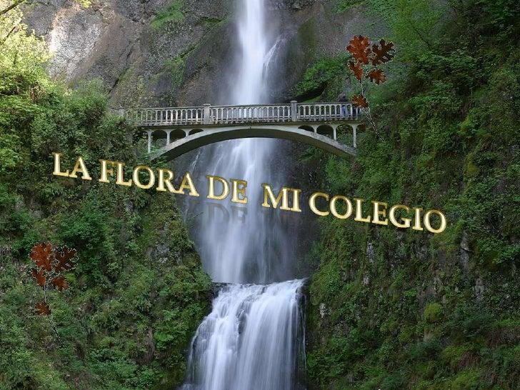 LA FLORA DE  MI COLEGIO<br />