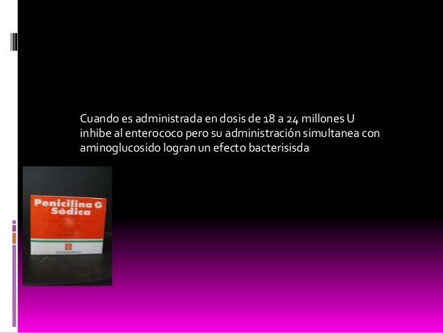 Cuando es administrada en dosis de 18 a 24 millones U inhibe al enterococo pero su administración simultanea con aminogluc...