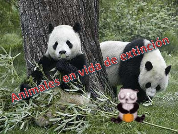Animales en vida de extinción <br />