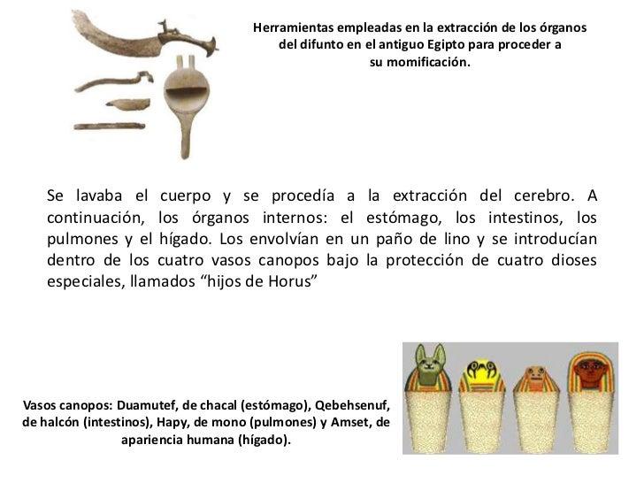 Momificaci n en el antiguo egipto - El taller de lo antiguo ...