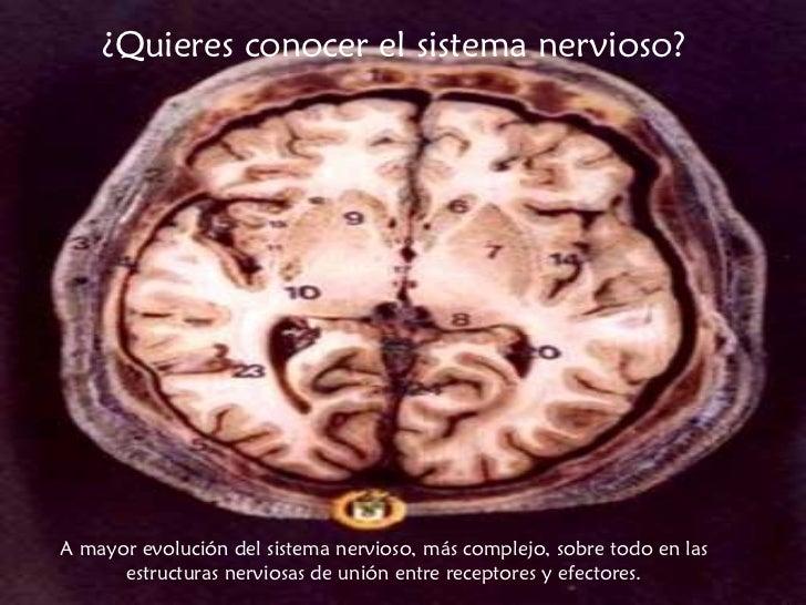 ¿Quieres conocer el sistema nervioso? A mayor evolución del sistema nervioso, más complejo, sobre todo en las estructuras ...