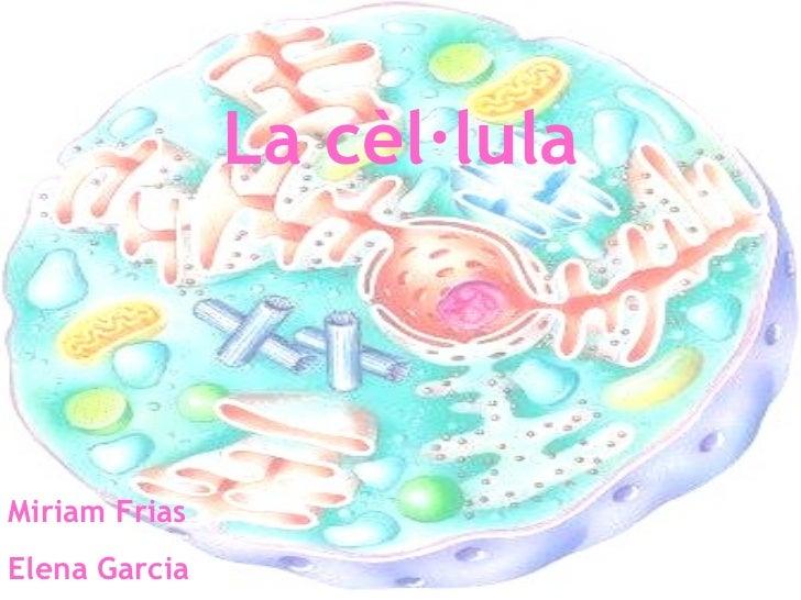 La cèl·lula Miriam Frias Elena Garcia