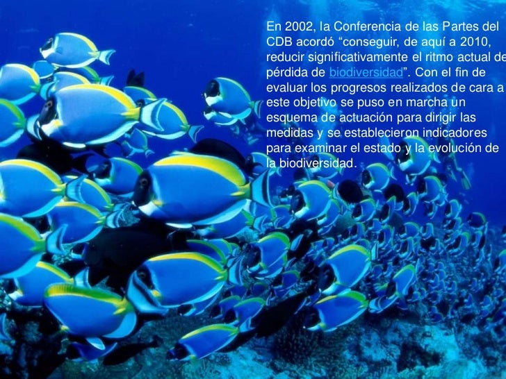 """En 2002, la Conferencia de las Partes delCDB acordó """"conseguir, de aquí a 2010,reducir significativamente el ritmo actual ..."""