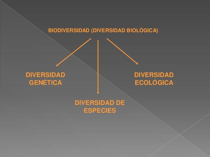BIODIVERSIDAD (DIVERSIDAD BIOLÓGICA)DIVERSIDAD                       DIVERSIDAD GENÉTICA                        ECOLÓGICA ...