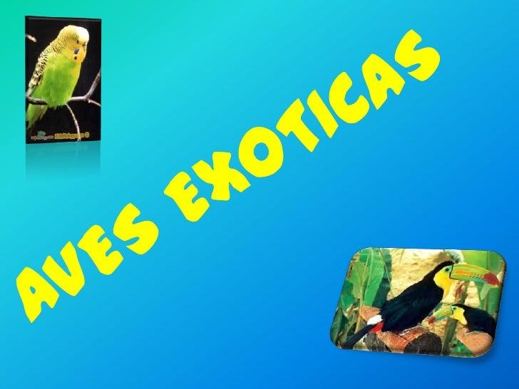 AVES EXOTICAS     PRESENTADO POR :CAMILA BEATRIZ GARZON VILLA      PRESENTADO A:    FRANCISCO MORENO            8-1       ...