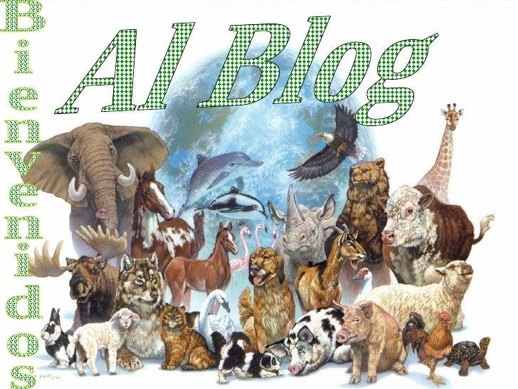 Bienvenidos Al Blog