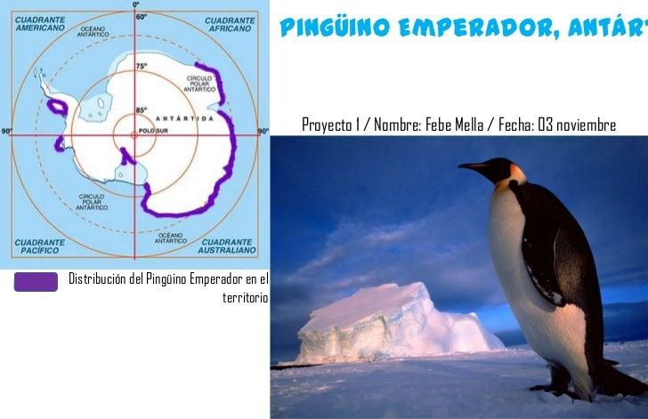 Pingüino Emperador, Antárt                                             Proyecto 1 / Nombre: Febe Mella / Fecha: 03 noviemb...