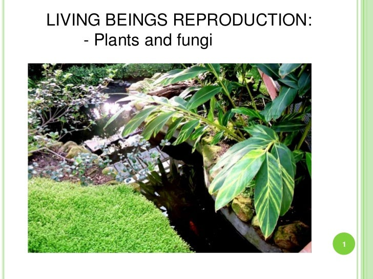 LIVING BEINGS REPRODUCTION:     - Plants and fungi                              1