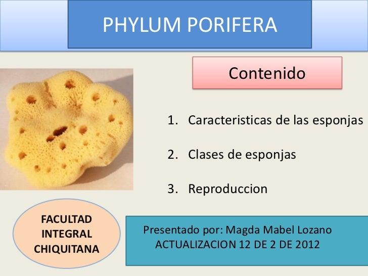 PHYLUM PORIFERA                               Contenido                    1. Caracteristicas de las esponjas             ...