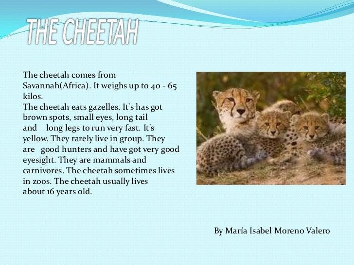 Animal Facts border=