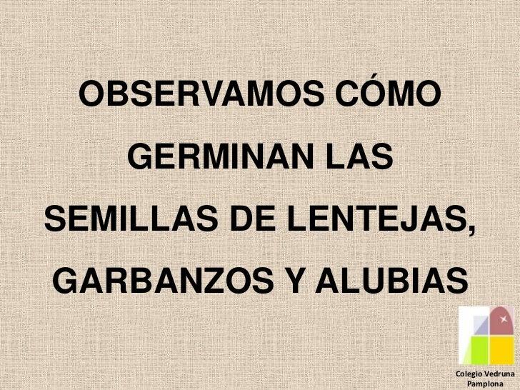 OBSERVAMOS CÓMO    GERMINAN LASSEMILLAS DE LENTEJAS,GARBANZOS Y ALUBIAS                   Colegio Vedruna                 ...