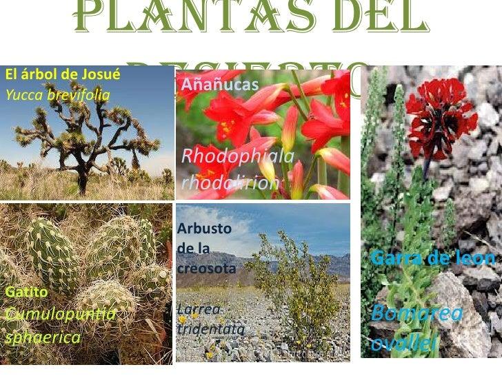 Desierto - Plantas que aguantan temperaturas extremas ...